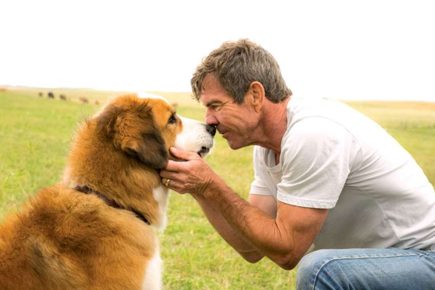 "Dennis Quaid stars in a scene with a dog named ""Buddy"" in the movie, 'A Dog's Purpose.'"
