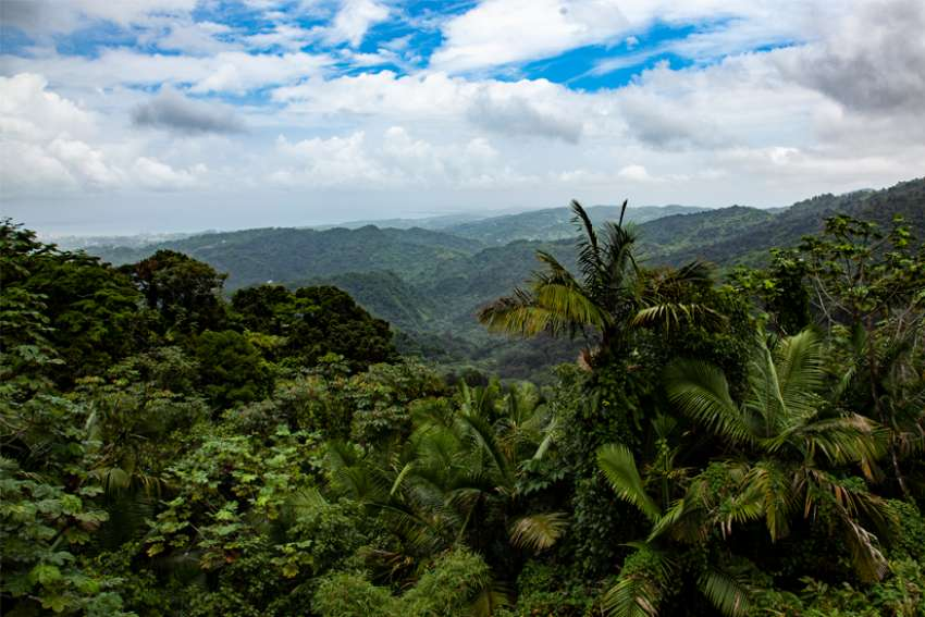 El Yunque National Forest is seen in this 2012 file photo. This year's Earth Day, April 22, marks the 50th anniversary of the observance.