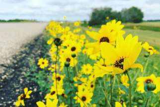 Wildflowers of rural Saskatchewan 'felt like a gift straight from God,' writes Leah Perrault.