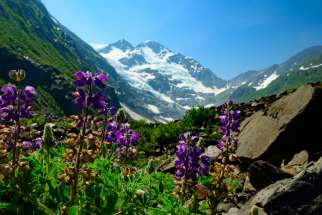 Colorful wildflowers frame the peak of Byron Glacier near Girwood, Alaska, in this file photo.