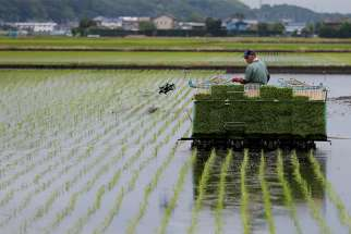 A farmer in Ryugasaki, Japan, transplants rice June 26, 2017. Speakers at a Vatican conference on sustainable development said the food people choose at the supermarket and cook in their kitchens can make a huge difference in helping address the global problems of hunger, obesity and climate change.