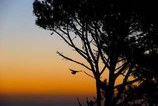 "A bird is seen landing on a tree at sunset in 2014 in Cape Town, South Africa. ""All African nations are contributing less to the total harmful emissions and are the most affected by climate change,"" Egyptian President Abdel Fattah el-Sisi said at the U.N. climate conference in Paris"