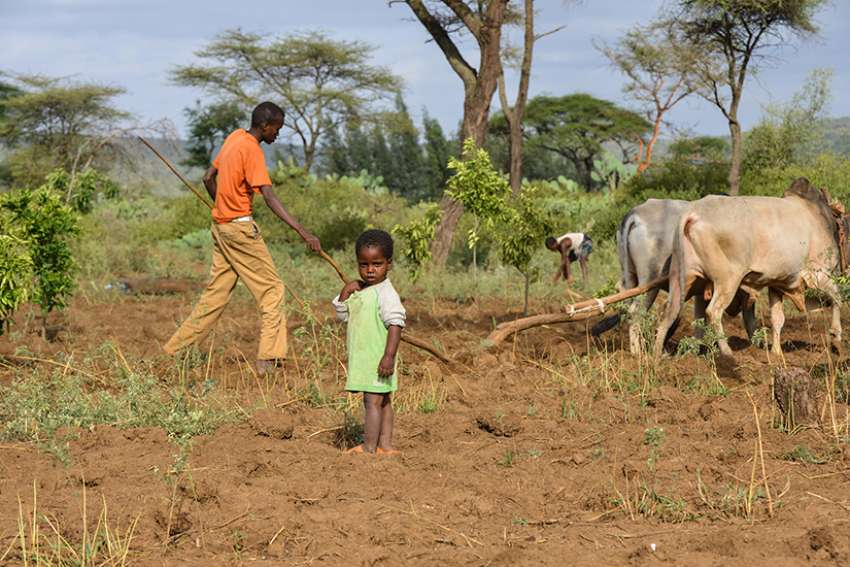 Development and Peace providing aid to farmers in Ethiopia 2015.