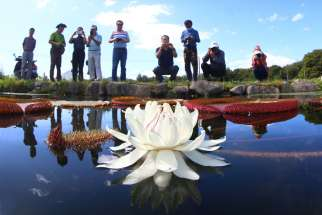 Tourists take pictures of a lotus flower in Hamyang, South Korea, Aug. 29. Pope Francis said religions can play an important role in protecting the environment and defending human rights in their countries, their communities and their schools.