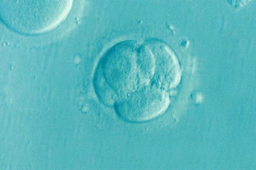 Oregon researchers announced that they have successfully altered genes in a human embryo for the first time in the United States.
