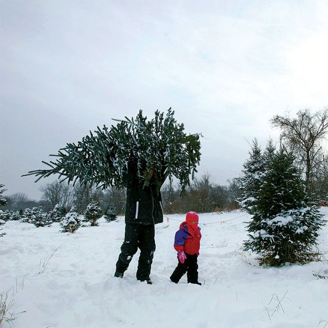 A father and his daughter take away a Christmas tree from a tree farm in Anoka, Minn. A real tree is better for the environment than an artificial one, according to the Green Church.
