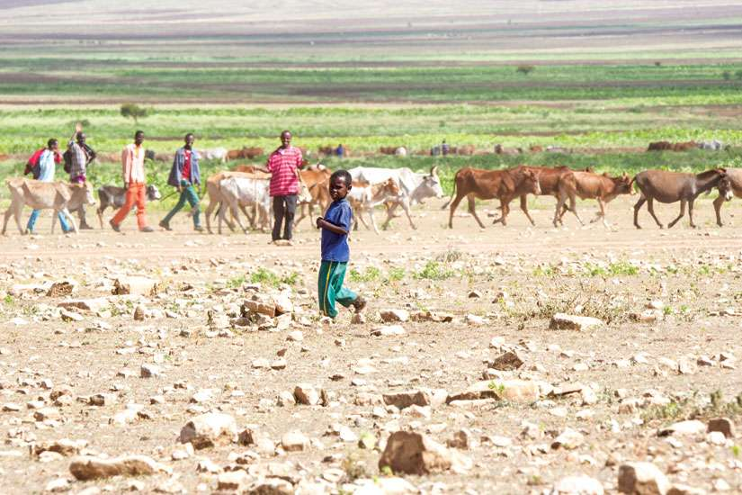 Even during what should have been the rainy season this summer, rural families struggled to find pasture for their herds outside Jijiga in eastern Ethiopia. Ethiopia is enduring its worst drought in 60 years.