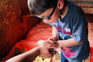 Tobin Baker holds one of the chicks of the farm's growing chicken coop.