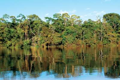 Saving the Amazon: A Special Feature