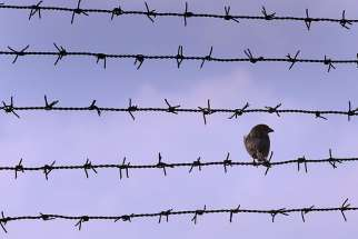 A sparrow rests on a barbed wire fence that surrounds Jilava prison near Bucharest, Romania. Bishop Anton Durcovici, who was secretly ordained under communist rule and died in prison in Romania was to be beatified May 17.