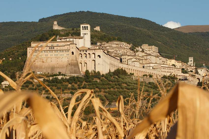 The Basilica of St. Francis with its bell tower is pictured through corn in Assisi, Italy, Sept. 6, 2011. Pope Francis has invited young economists and entrepreneurs to take part in an initiative to be launched in Assisi March 26-28, 2020. The initiative seeks to find new ways to do business, promote human dignity and protect the environment.
