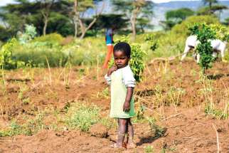 One of the youngest members of a family farm co-operative in the field as his uncles plough new land for tomatoes. The child will be part of a new generation of Somalis who will grow up without the nomadic life of his ancestors