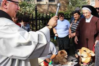 Fr. James Zammit blesses some of the animals at The Blessing of the Creatures Oct. 7 at Toronto's St. Francis of Assisi Church.