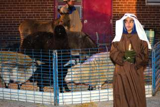 Donkeys and lambs are part of the Holy Spirit Catholic School's nativity scene performance.