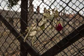 A dried rose hangs from the entrance gate to Auschwitz I in Oswiecim, Poland. The Nazi regime annexed Oswiecim for the Third Reich in 1939 and renamed it Auschwitz. The main concentration and extermination camp established in 1940 was expanded to include Auschwitz II (Auschwitz-Birkenau) in 1941 and Auschwitz III (Auschwitz-Monowitz) in 1942.