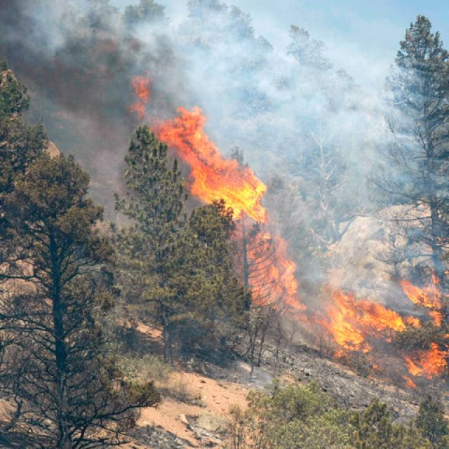 Trees burn in the Waldo Canyon wildfire west of Colorado Springs June 26. A massive wildfire that started in the canyon, a popular hiking spot, forced the evacuation of neighborhoods in several Catholic parishes in the Diocese of Colorado Springs, as wel l as the cancellation of Sunday Masses at two parishes.