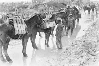 Pack horses taking up ammunition to the guns of the 20th Battery Canadian Field Artillery, Neuville St. Vaast, April 1917.  The 20th Battery Canadian Field Artillery taking up ammunition. In the Canadian forward area, roads and tramways were repaired and extended by pioneer and engineering units for the daily hauling of more than 720 tonnes or more of ammunition, rations and stores. Artillery ammunition allotted for the Vimy operation amounted to 38,250 tonnes.